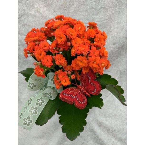 Oransje ildtopp med potte og pynt